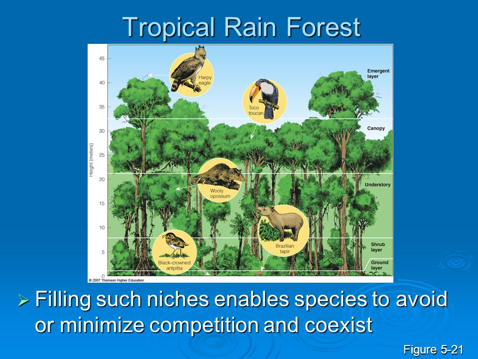 Tropical Rain Forest Filling such niches enables species to avoid or minimize competition and coexist.