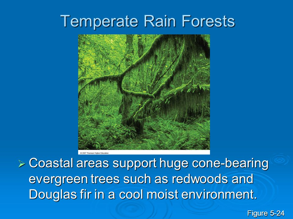 Temperate Rain Forests