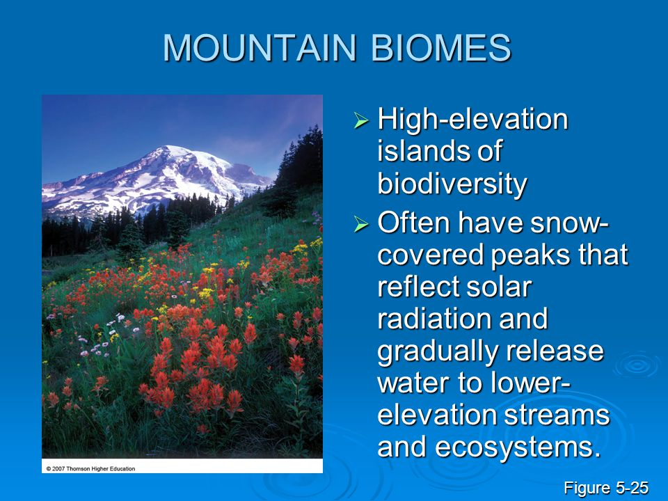 MOUNTAIN BIOMES High-elevation islands of biodiversity