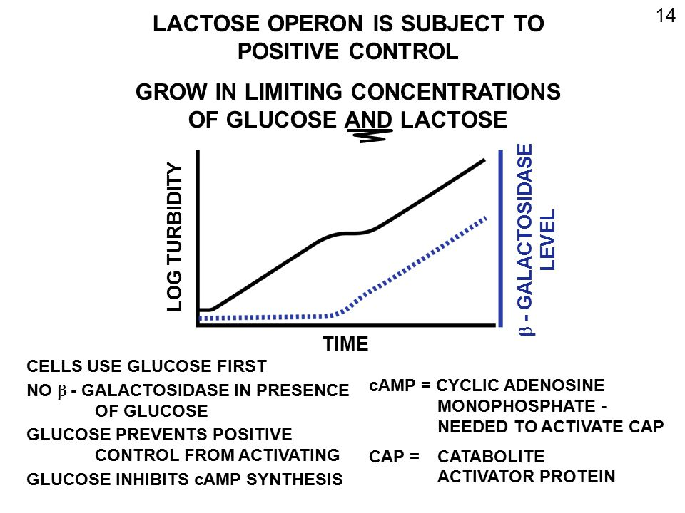 LACTOSE OPERON IS SUBJECT TO POSITIVE CONTROL