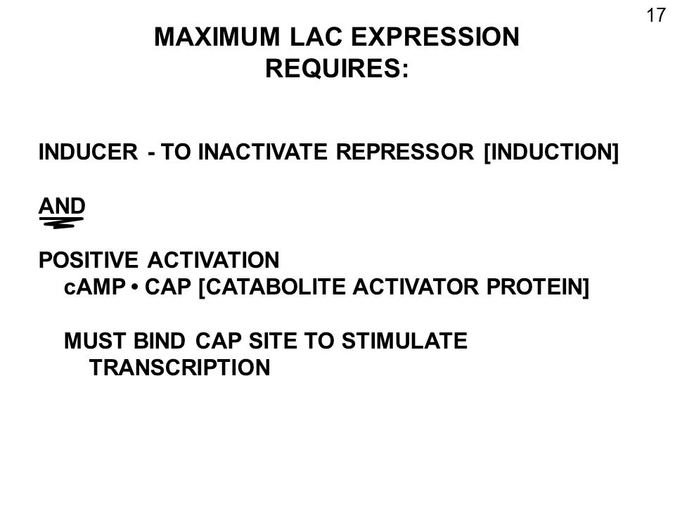 MAXIMUM LAC EXPRESSION REQUIRES: