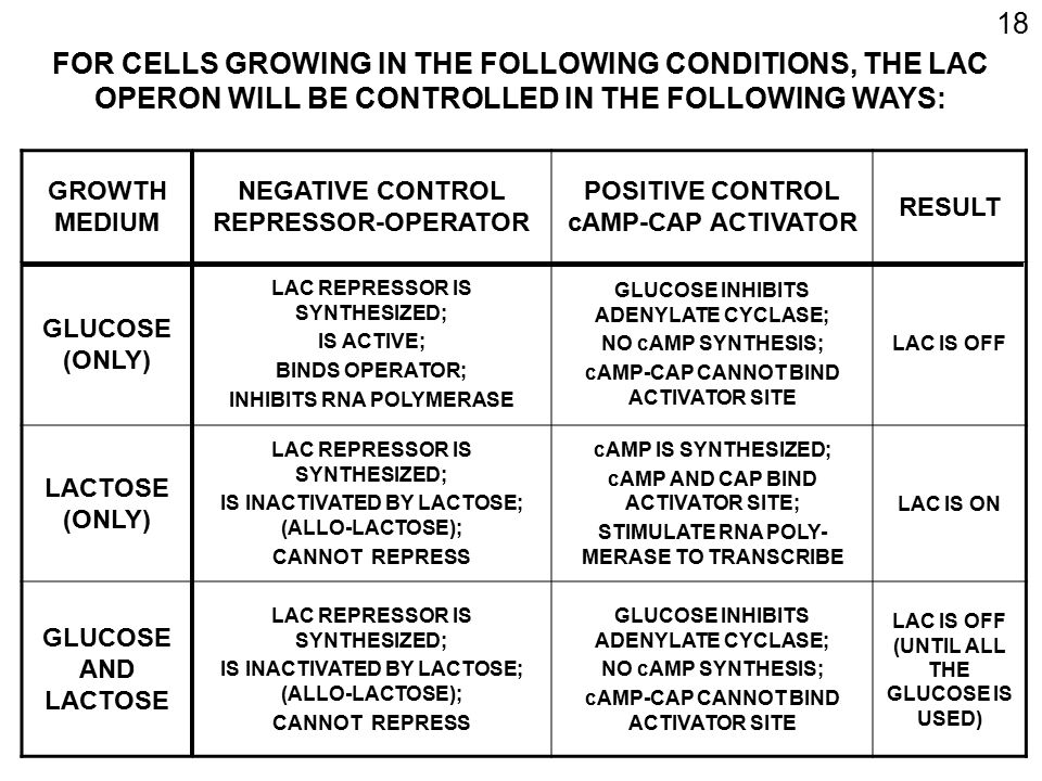 18 FOR CELLS GROWING IN THE FOLLOWING CONDITIONS, THE LAC OPERON WILL BE CONTROLLED IN THE FOLLOWING WAYS:
