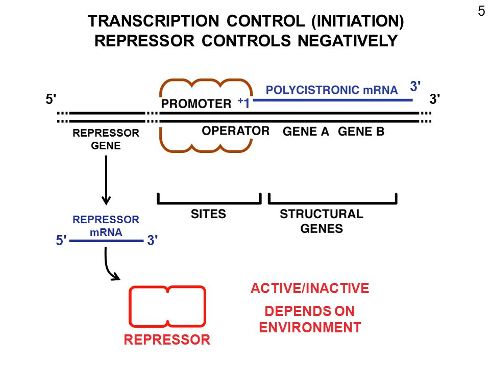 TRANSCRIPTION CONTROL (INITIATION) REPRESSOR CONTROLS NEGATIVELY