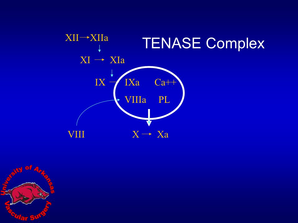 XII XIIa TENASE Complex XI XIa IX IXa Ca++ VIIIa PL VIII X Xa