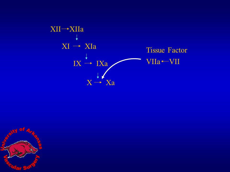 XII XIIa XI XIa Tissue Factor VIIa VII IX IXa X Xa