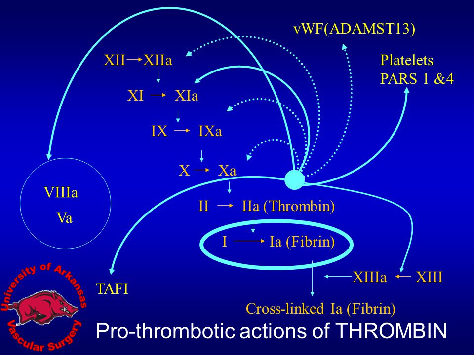 Pro-thrombotic actions of THROMBIN