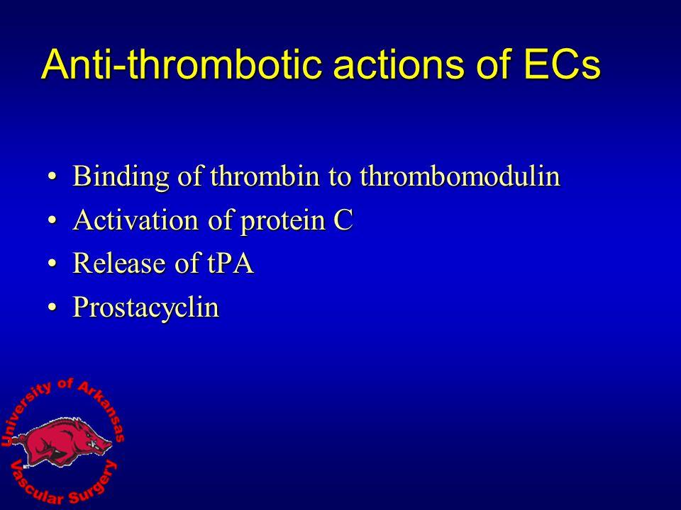 Anti-thrombotic actions of ECs
