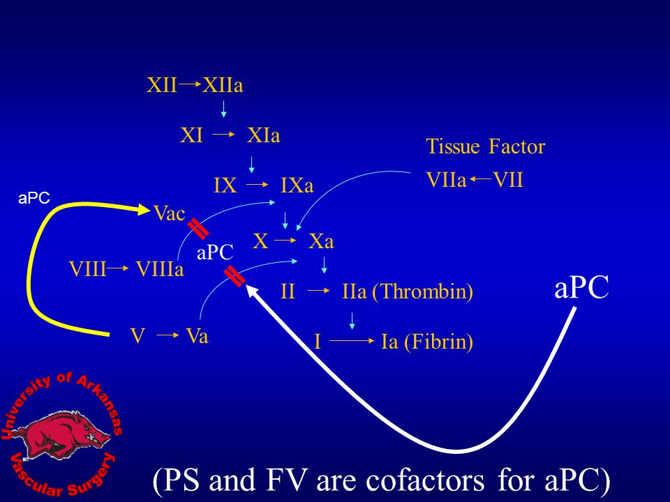 (PS and FV are cofactors for aPC)