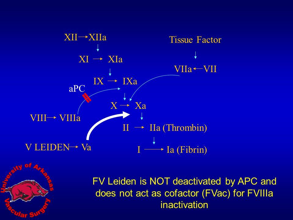 XII XIIa. Tissue Factor. XI. XIa. VIIa. VII. IX. IXa. aPC. X. Xa. VIII. VIIIa. II. IIa (Thrombin)