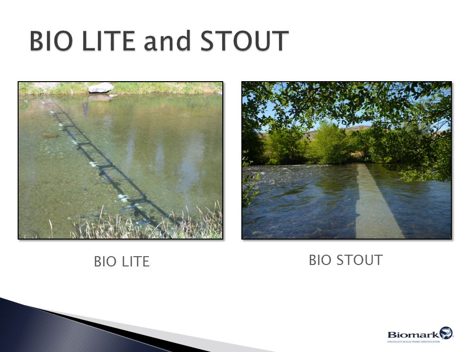 BIO LITE and STOUT BIO STOUT BIO LITE