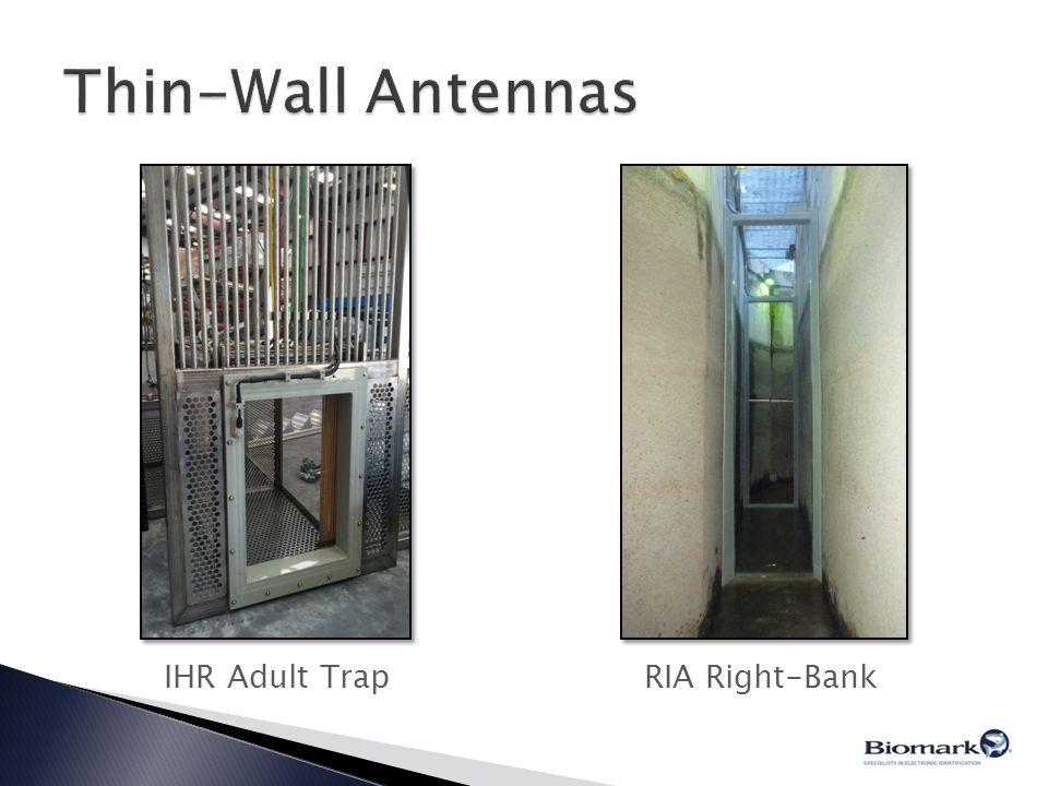 Thin-Wall Antennas IHR Adult Trap RIA Right-Bank