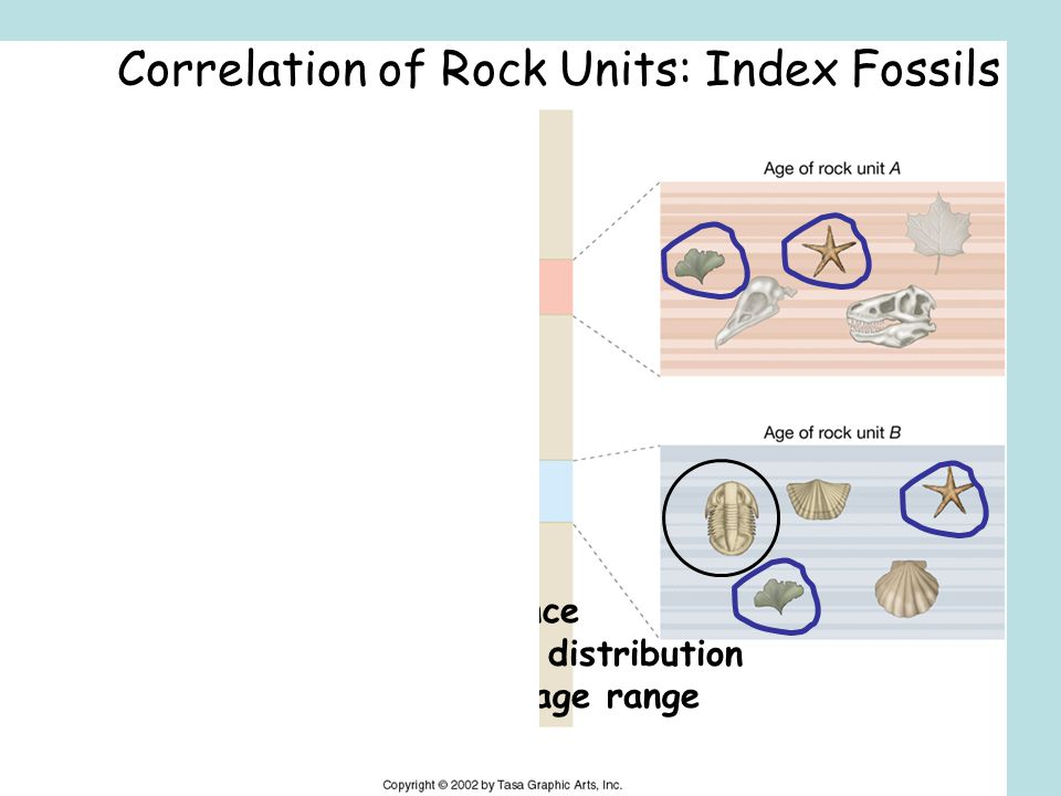 Correlation of Rock Units: Index Fossils