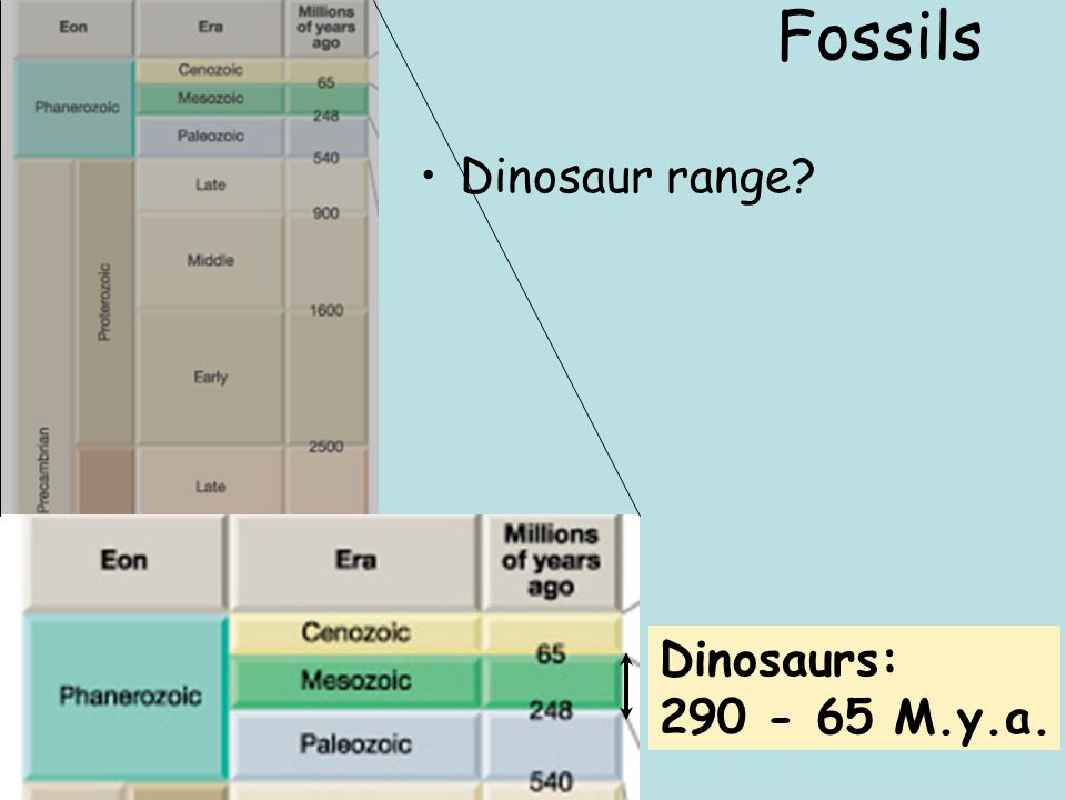 Fossils Dinosaur range Dinosaurs: 290 - 65 M.y.a.