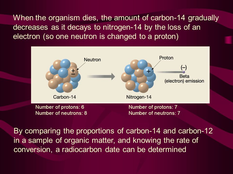 When the organism dies, the amount of carbon-14 gradually decreases as it decays to nitrogen-14 by the loss of an electron (so one neutron is changed to a proton)