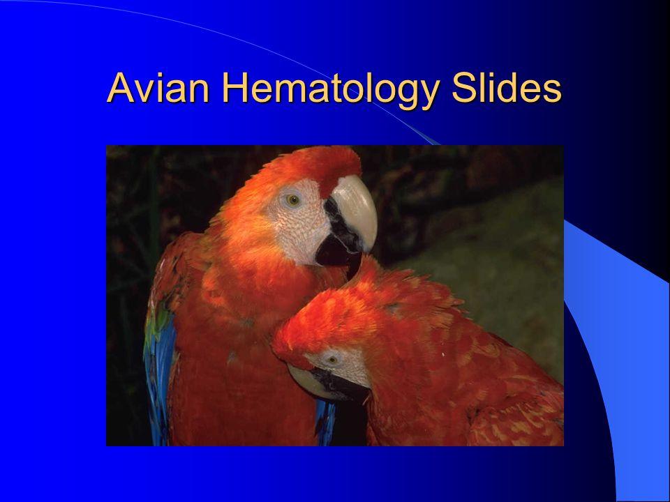 Avian Hematology Slides