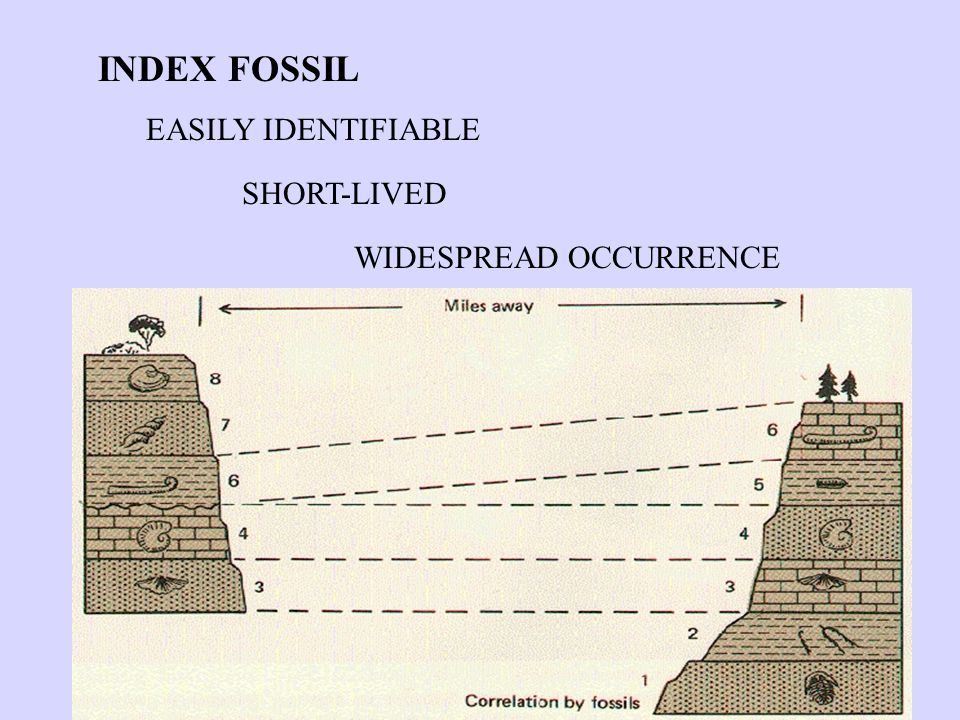 INDEX FOSSIL EASILY IDENTIFIABLE SHORT-LIVED WIDESPREAD OCCURRENCE