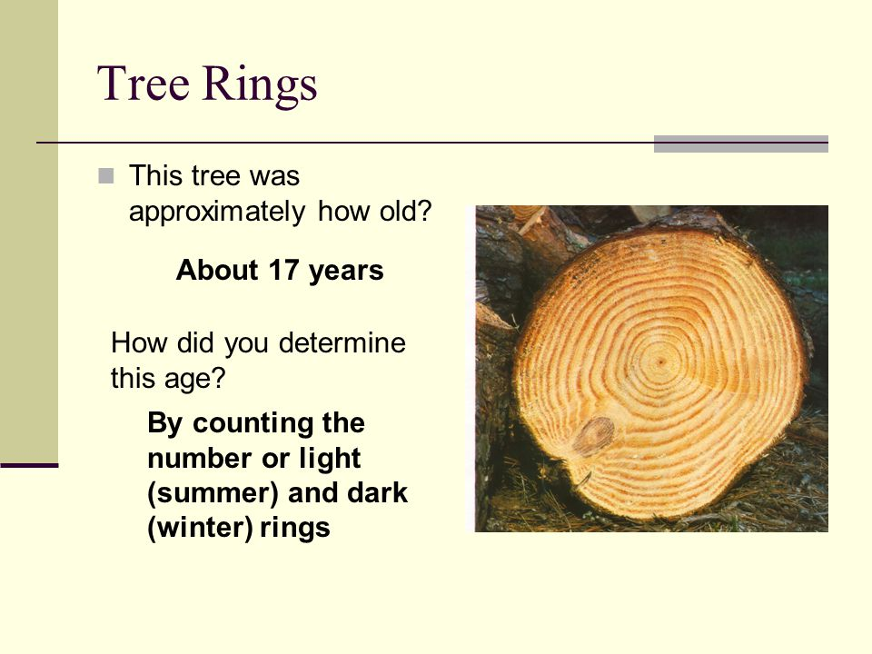 Tree Rings This tree was approximately how old About 17 years