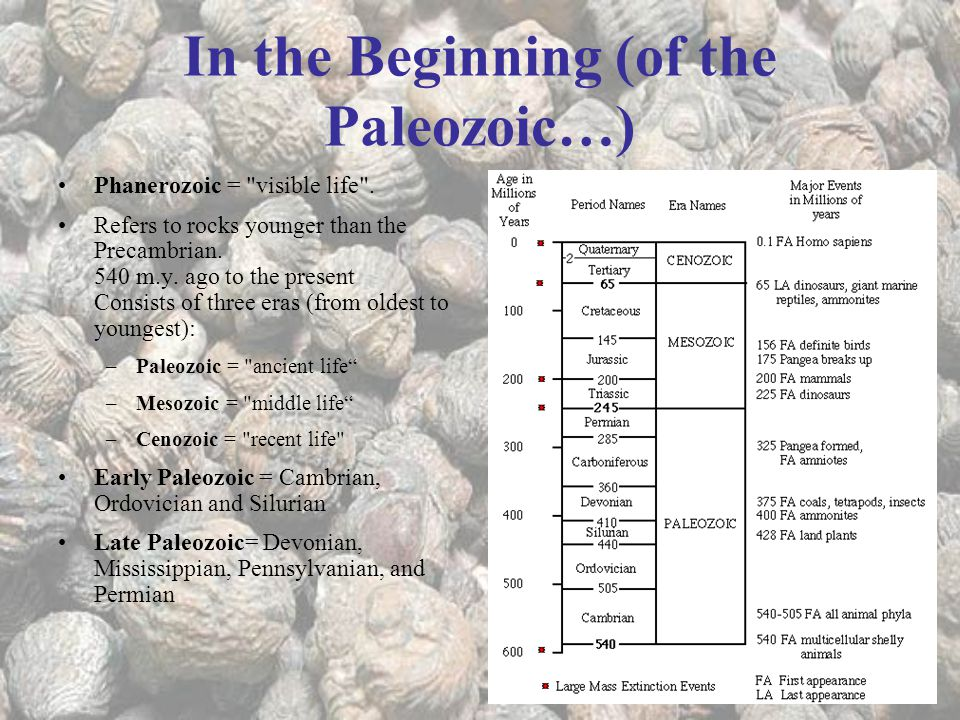 In the Beginning (of the Paleozoic…)