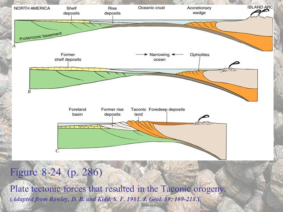 Figure 8-24 (p. 286) Plate tectonic forces that resulted in the Taconic orogeny.