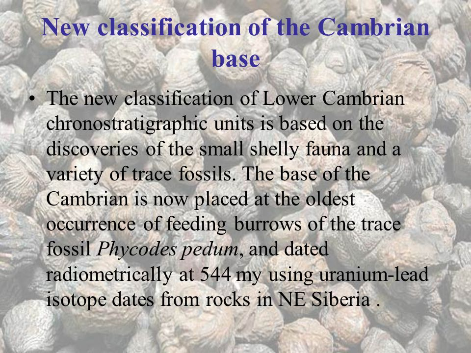 New classification of the Cambrian base