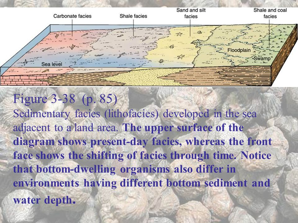 Figure 3-38 (p. 85) Sedimentary facies (lithofacies) developed in the sea adjacent to a land area.
