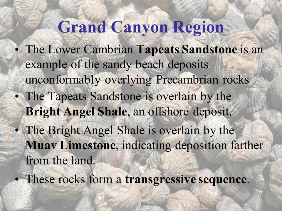 Grand Canyon Region The Lower Cambrian Tapeats Sandstone is an example of the sandy beach deposits unconformably overlying Precambrian rocks.