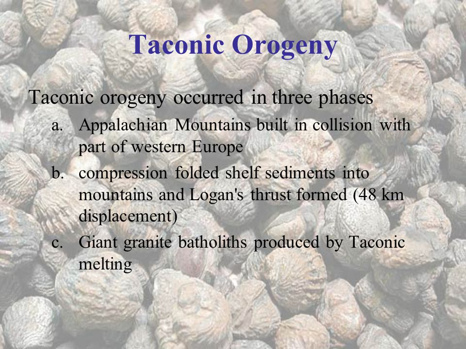 Taconic Orogeny Taconic orogeny occurred in three phases