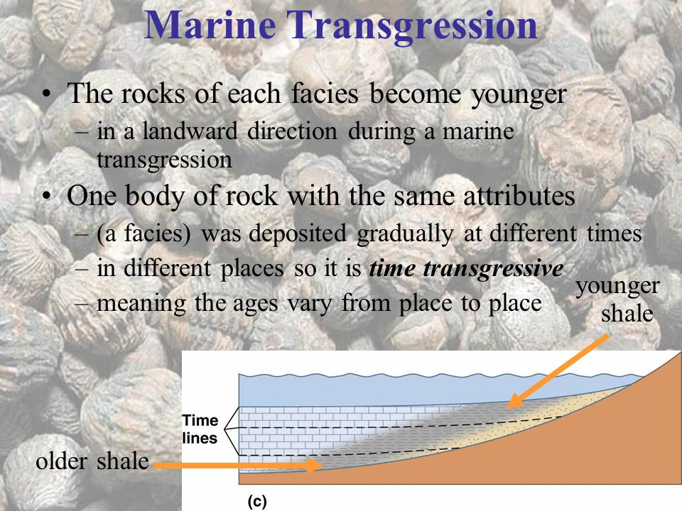 Marine Transgression The rocks of each facies become younger