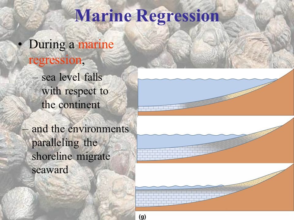 Marine Regression During a marine regression,