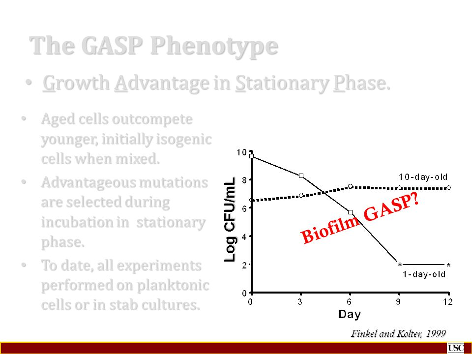 The GASP Phenotype Growth Advantage in Stationary Phase. Biofilm GASP