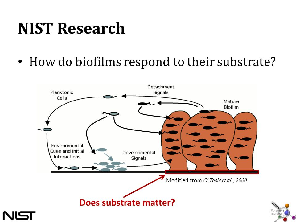 NIST Research How do biofilms respond to their substrate