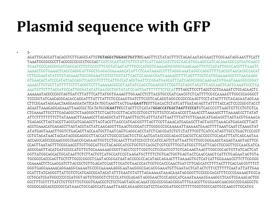 Plasmid sequence with GFP