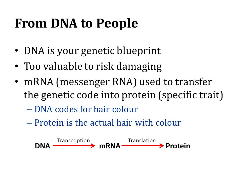 From DNA to People DNA is your genetic blueprint