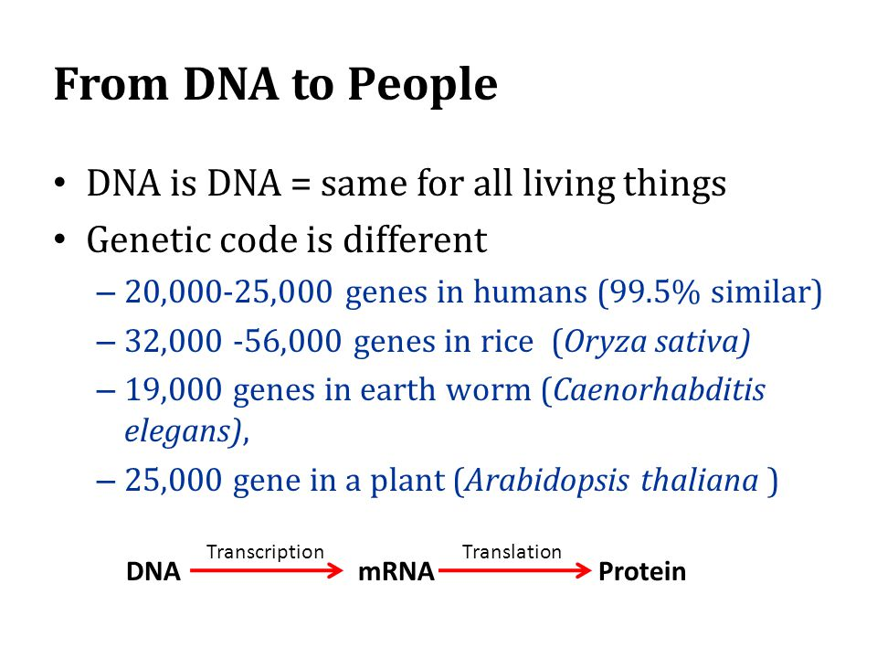 From DNA to People DNA is DNA = same for all living things