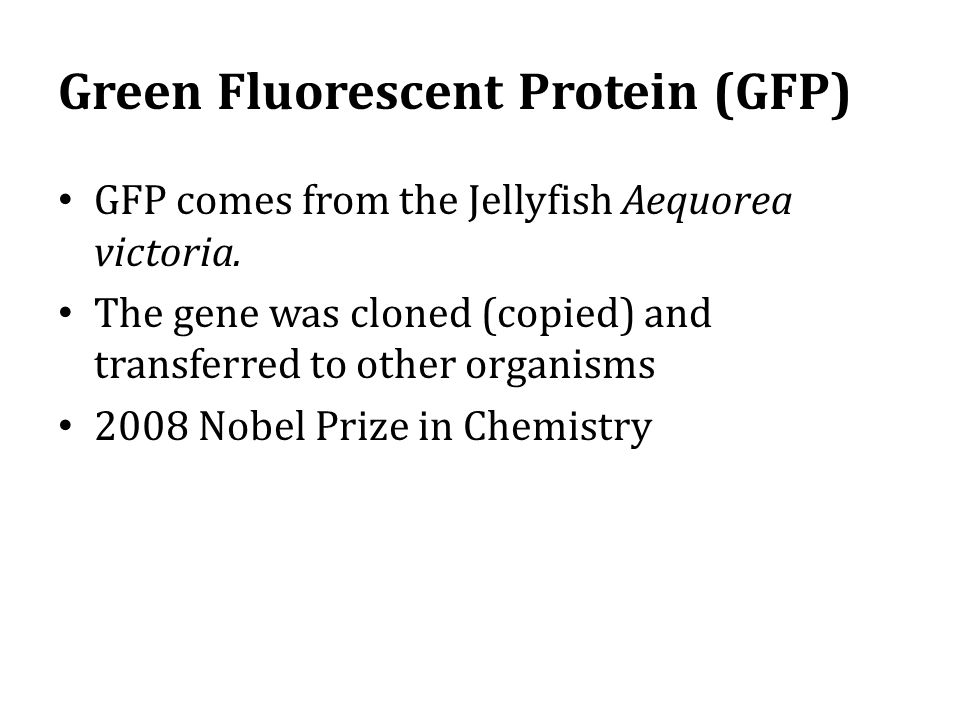 Green Fluorescent Protein (GFP)