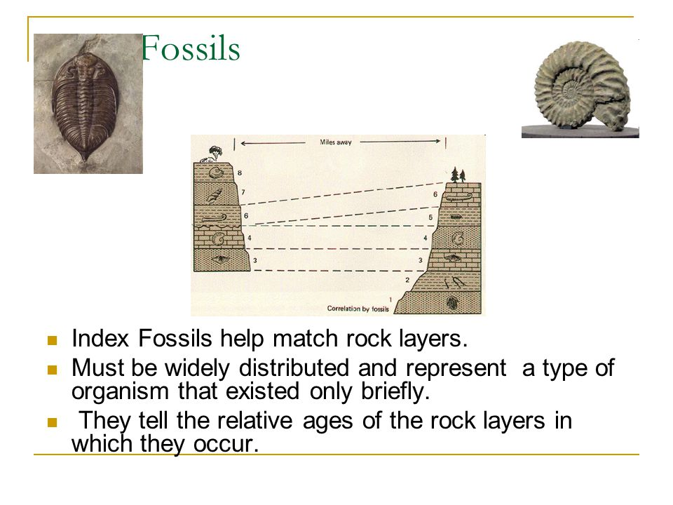 Index Fossils Index Fossils help match rock layers.