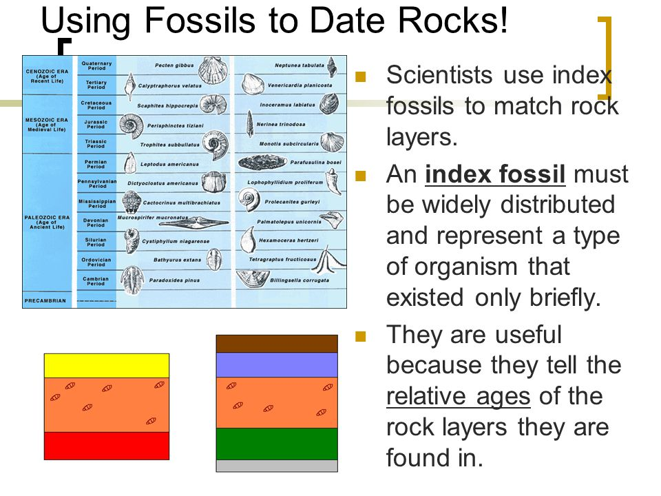 Using Fossils to Date Rocks!