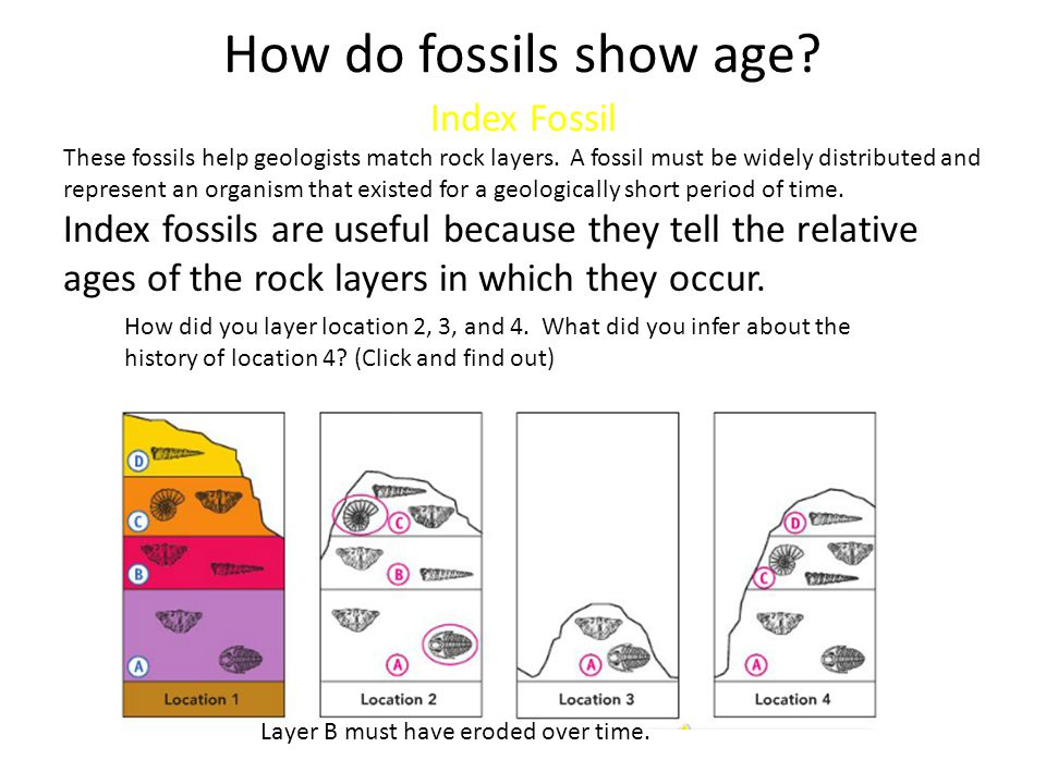How do fossils show age Index Fossil