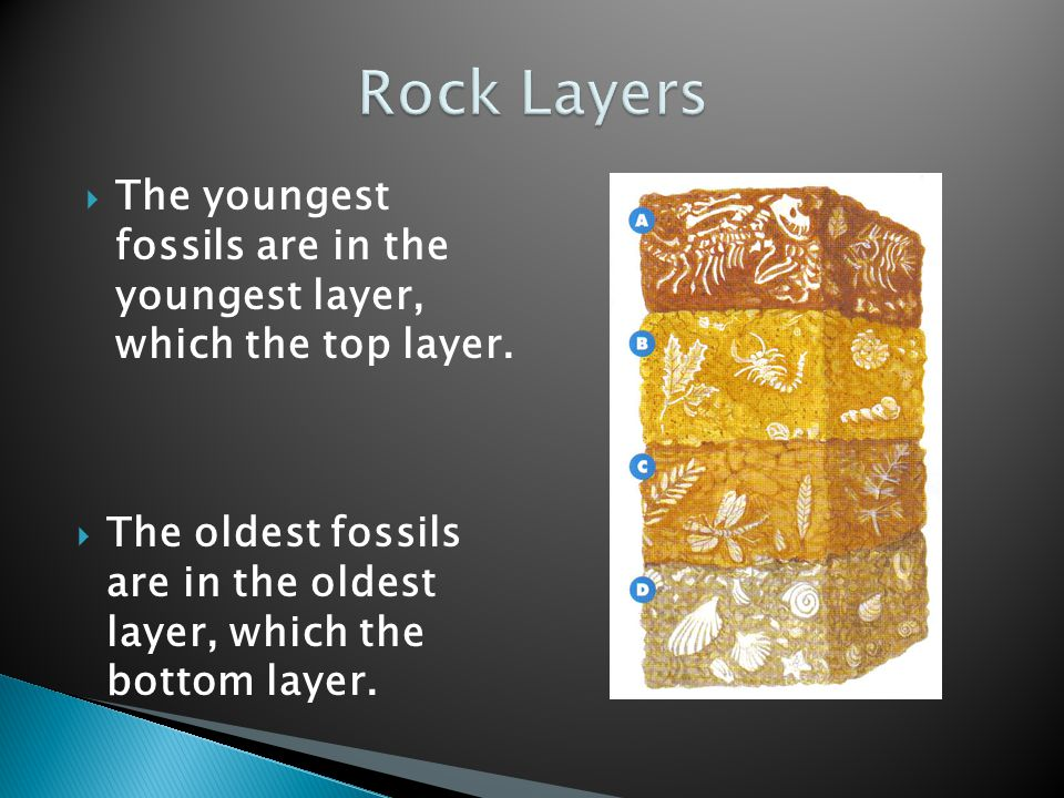 Rock Layers The youngest fossils are in the youngest layer, which the top layer.