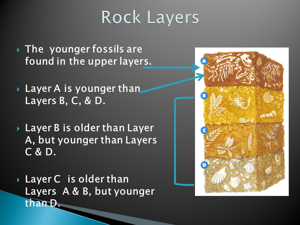 Rock Layers The younger fossils are found in the upper layers.