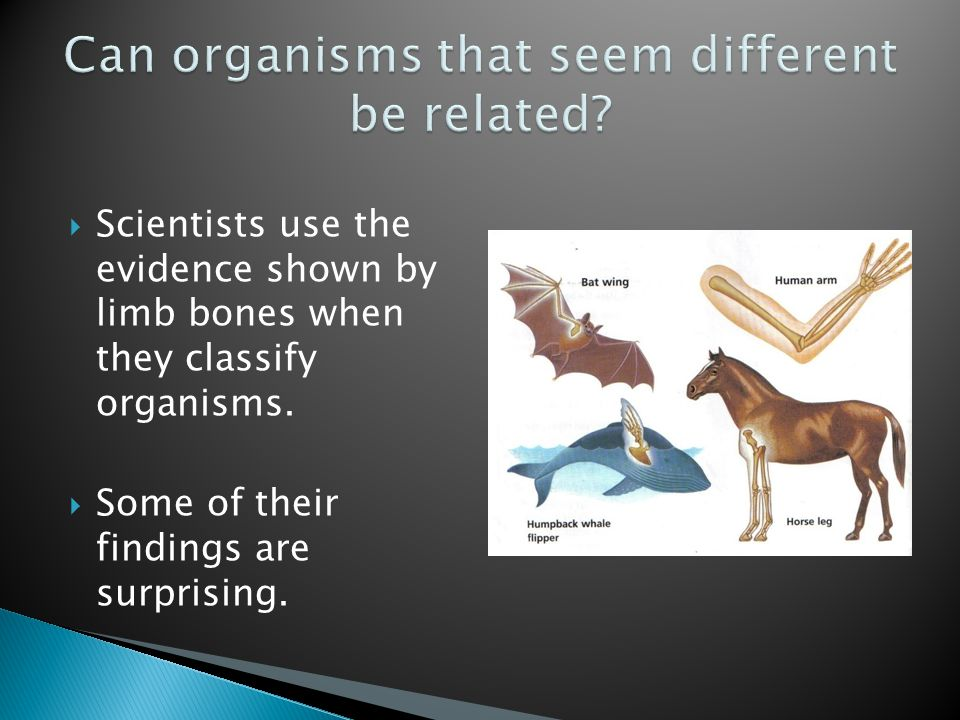 Can organisms that seem different be related