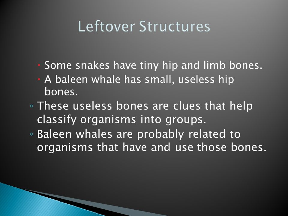 Leftover Structures Some snakes have tiny hip and limb bones. A baleen whale has small, useless hip bones.