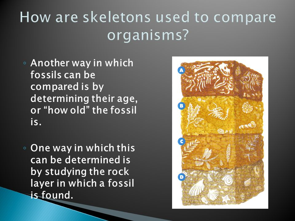 How are skeletons used to compare organisms