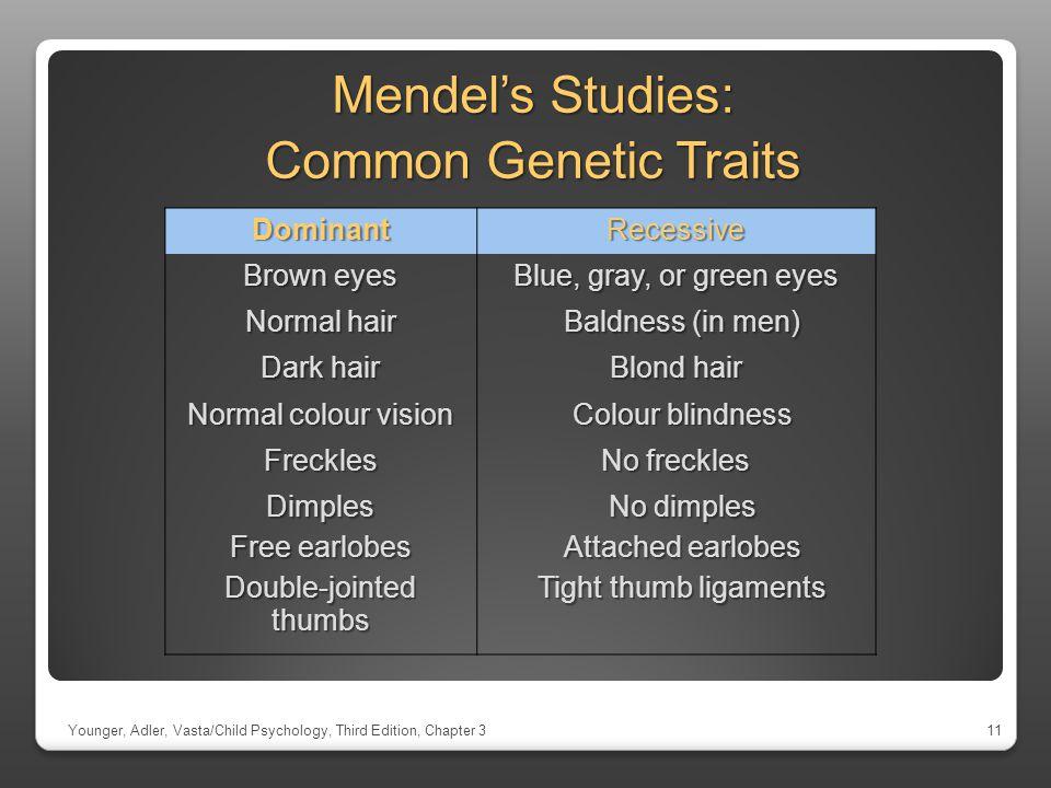 Mendel's Studies: Common Genetic Traits