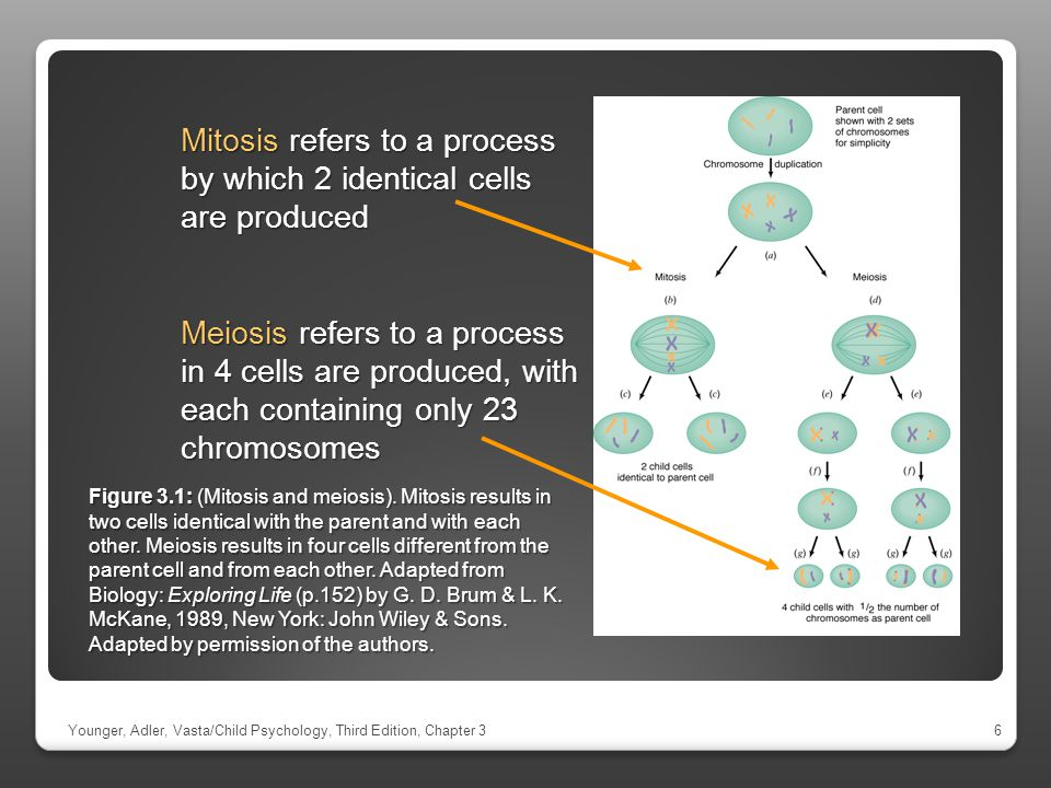 Mitosis refers to a process by which 2 identical cells are produced