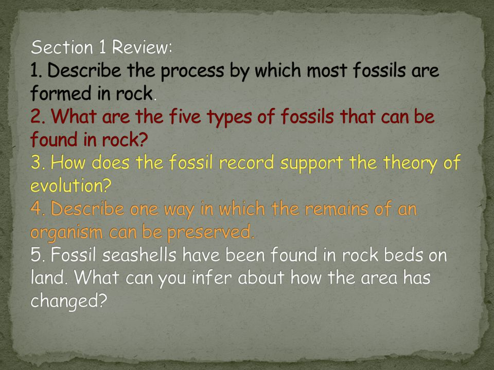 Section 1 Review: 1. Describe the process by which most fossils are formed in rock.