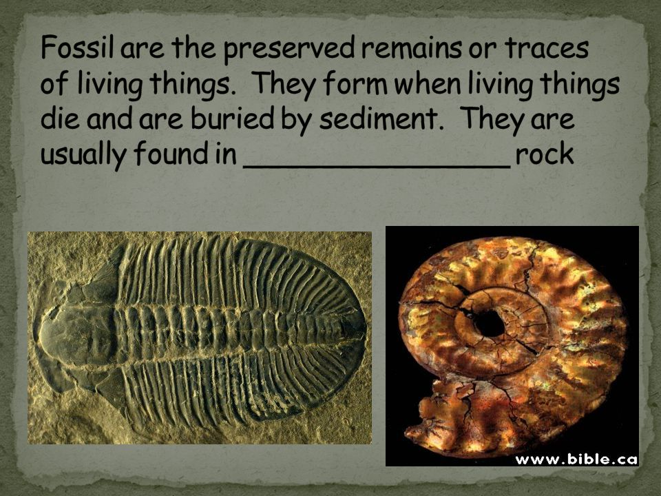 Fossil are the preserved remains or traces of living things