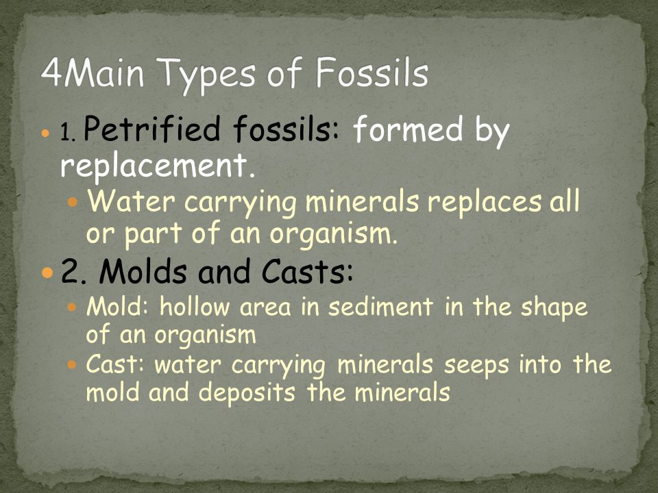4Main Types of Fossils 2. Molds and Casts: