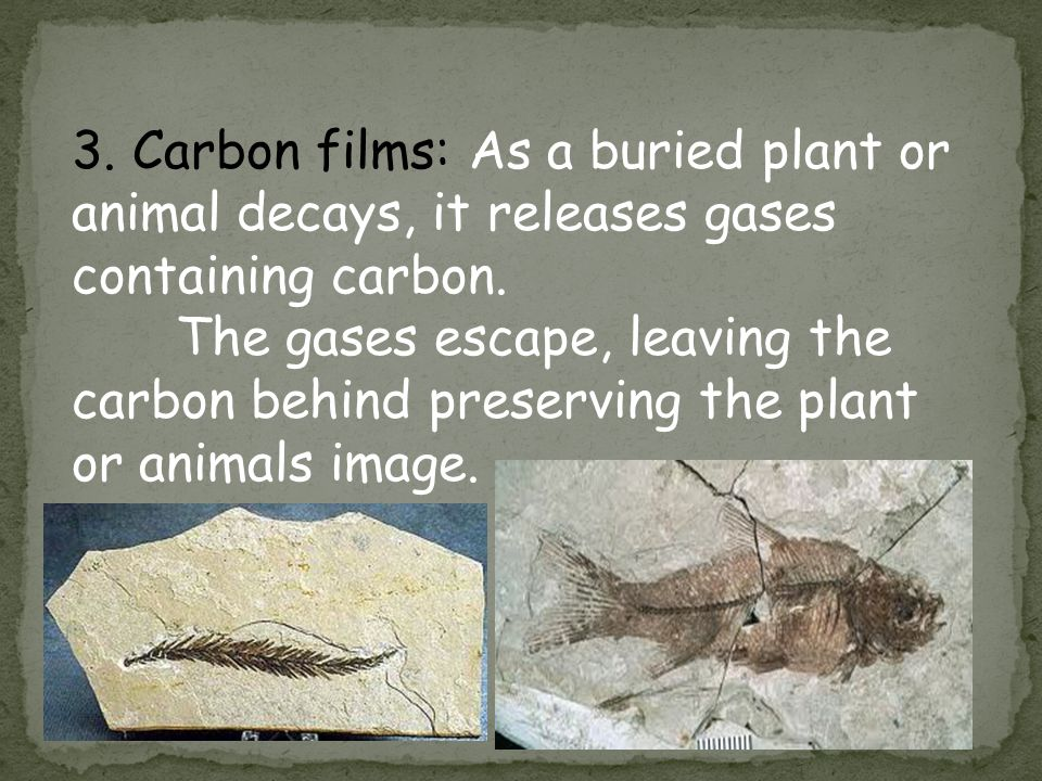 * 3. Carbon films: As a buried plant or animal decays, it releases gases containing carbon.