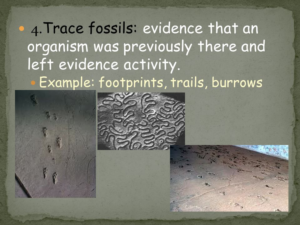 * 4.Trace fossils: evidence that an organism was previously there and left evidence activity.